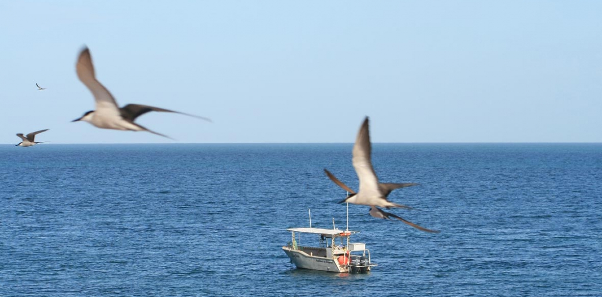 Environmental-Seabird-Survey