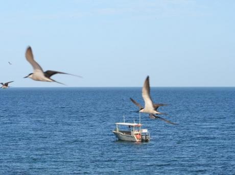 Environmental-Seabird-Survey